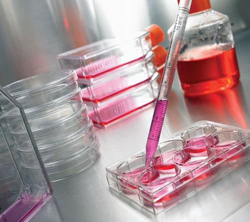 XerumFree - additivo per colture cellulari privo di componenti di origine animale o umana