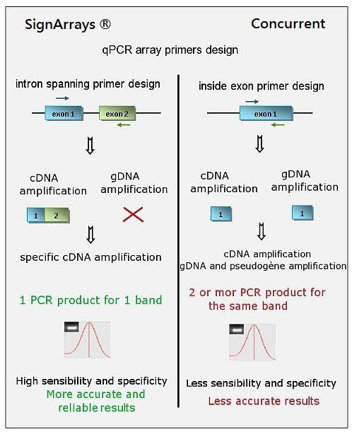 Il disegno dei primer secondo il metodointron-spaning di tutti i geni delle vie di segnalazione