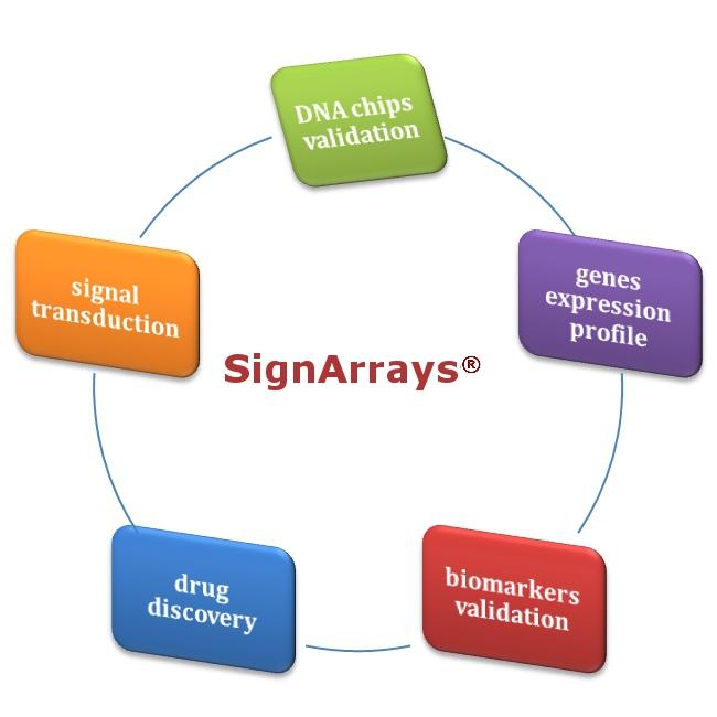 kit SignArrays® - saggi qPCR per lo studio delle vie di segnalazione