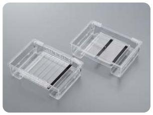Sistema di elettroforesi i-MyRun II (CBJ-IMR2-001): fino a 152 campioni in un singolo gel