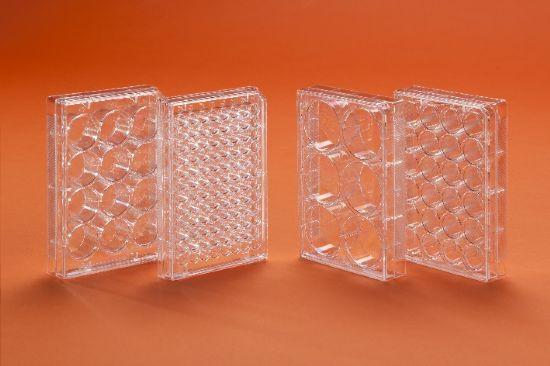 Plastica per laboratorio in promozione: Piastre per colture cellulari sterili
