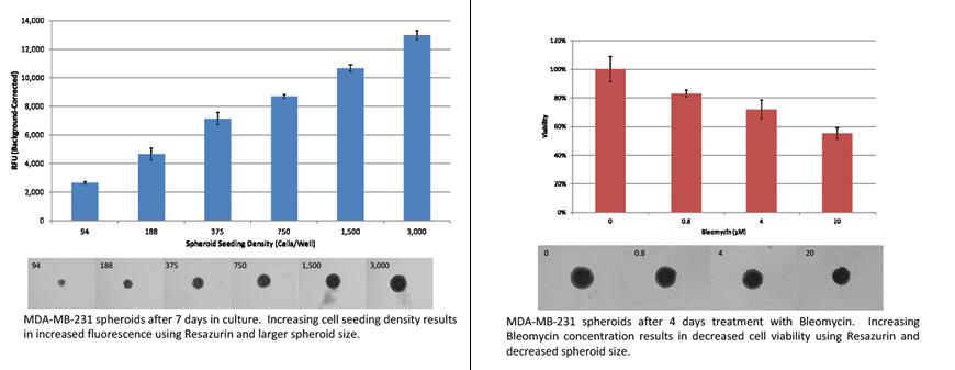 Spheroid Cell Proliferation / Viability Assay.